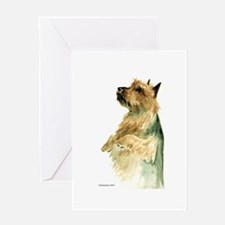 Australian Terrier beg Greeting Card