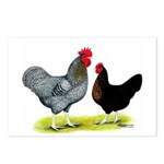 Black Sex-link Chickens Postcards (Package of 8)