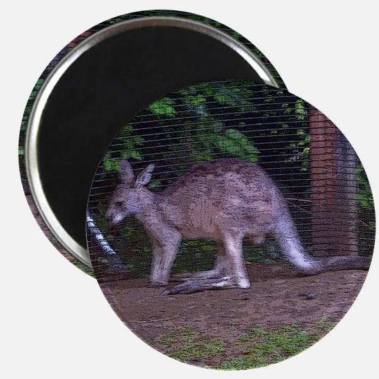wallaby 2 Magnet