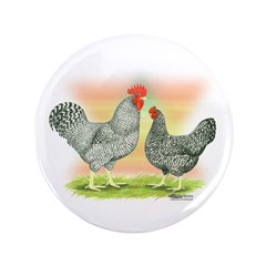 Barred Holland Chickens 3.5