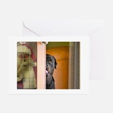 Rottweiler Spying on San Greeting Cards (Pk of 20)