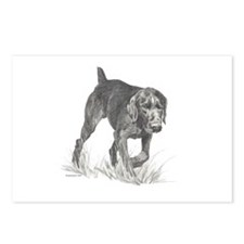 German Wire Hair Pointer Postcards (Package of 8)