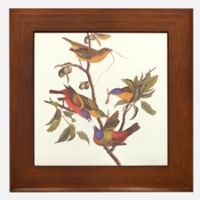 Painted Bunting Birds in Wild Olive Tree Framed Ti