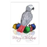 African grey christmas Postcards