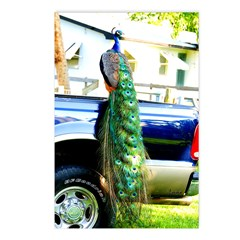 peacock on a Pickup Postcards (Package of 8)