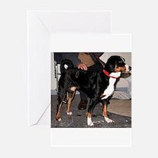Appenzeller Sennenhund full Greeting Cards