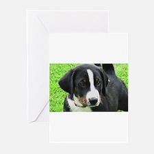 Appenzeller Sennenhund puppy Greeting Cards