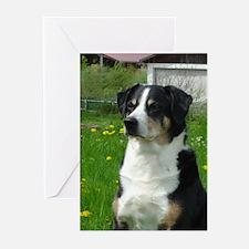 Appenzeller Sennenhund Greeting Cards