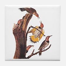 Gold-Winged Woodpecker Vintage Tile Coaster