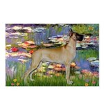 Lilies / Gr Dane (f) Postcards (Package of 8)
