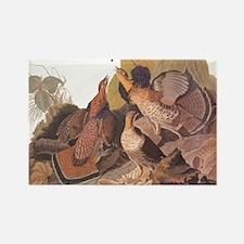 Ruffed Grouse Vintage Audubon Art Magnets