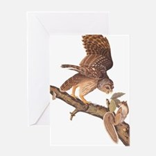Owl and Squirrel Vintage Audubon Art Greeting Card
