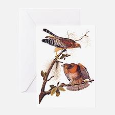 Red Shouldered Hawk Vintage Audubon Art Greeting C
