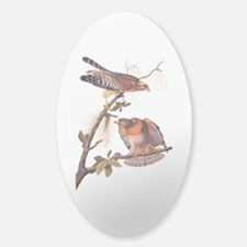 Red Shouldered Hawk Vintage Audubon Art Decal