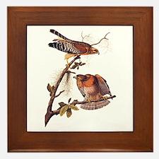 Red Shouldered Hawk Vintage Audubon Art Framed Til