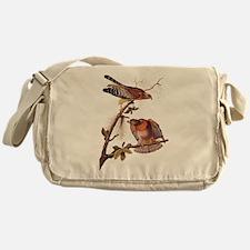 Red Shouldered Hawk Vintage Audubon Art Messenger