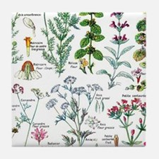 Botanical Illustrations - Larousse Pl Tile Coaster