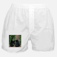 black bears Boxer Shorts