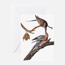 Passenger Pigeon Vintage Audubon Art Greeting Card