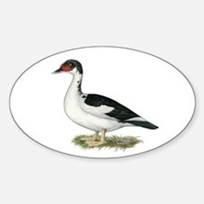 Muscovy Black Pied Duck Decal