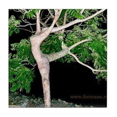 Tree Goddess Simulacra Tile Coaster