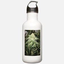Marijuana Plant Water Bottle