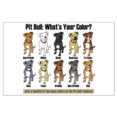 Pit Bull: What's Your Color? Posters