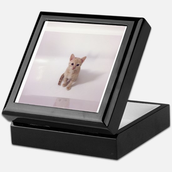 Kitten in bathtub Keepsake Box