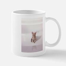 Kitten in bathtub Mugs