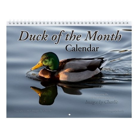 Duck Wall 28 Images Get Out Of Your Comfort Zone Of