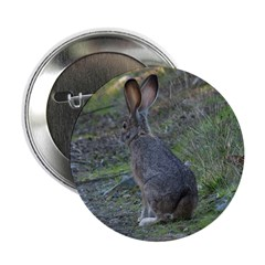 Black Tailed Jackrabbit 2.25