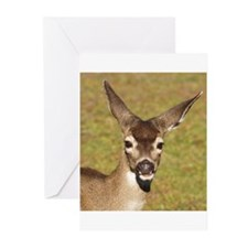 Young Doe Greeting Cards (Pk of 20)