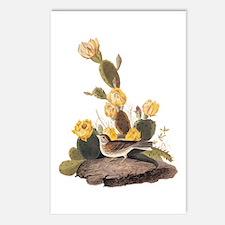 Bay Winged Bunting Vintage Audubon Art Postcards (