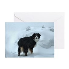 Mr. Syd Greeting Cards (Pk of 20)