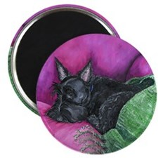 Napping Scottie Magnet