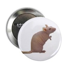 "Curly - the Hairless Rat 2.25"" Button (10 pack)"