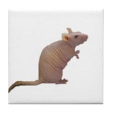 Curly - the Hairless Rat Tile Coaster