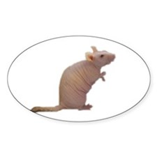 Curly - the Hairless Rat Oval Decal