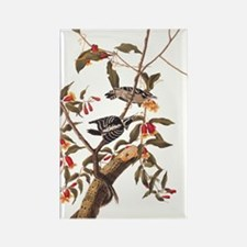 Downy Woodpecker Vintage Audubon Art Magnets