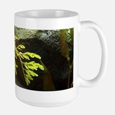 Leafy Sea Dragon With Rocks Mugs