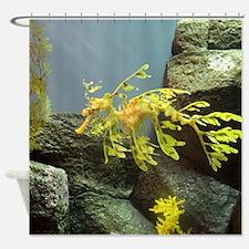 Leafy Sea Dragon with Rocks Shower Curtain