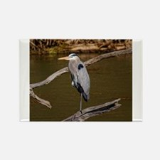 GREAT BLUE HERON s Magnets