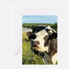 curious cow, 2 Greeting Cards