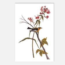 Blackburnian Warbler Bird Vintage Audubon Art Post