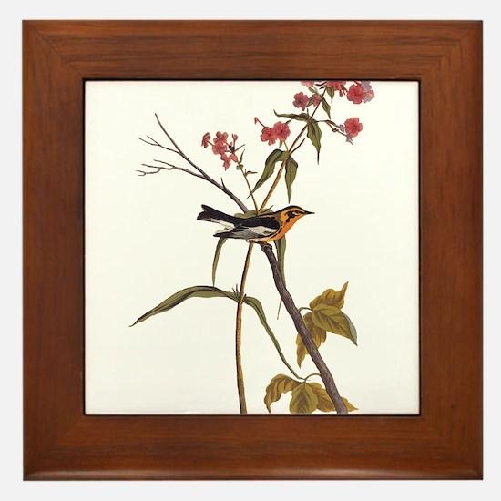 Blackburnian Warbler Bird Vintage Audubon Art Fram