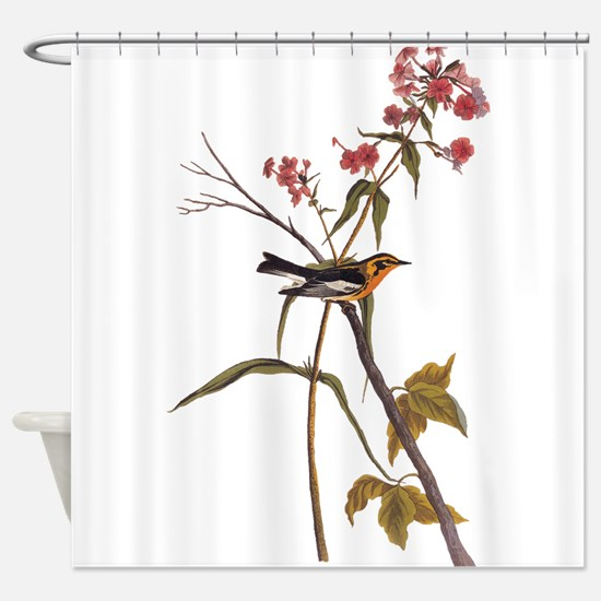 Blackburnian Warbler Bird Vintage Audubon Art Show