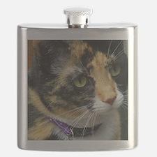 Cute Cat photos Flask