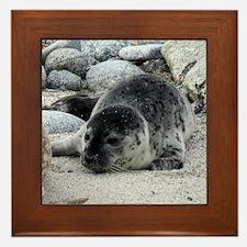 Harbor Seal Pup Framed Tile