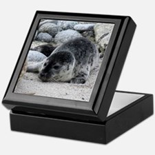 Harbor Seal Pup Keepsake Box