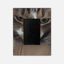 Funny Grumpy cat Picture Frame